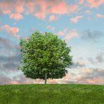 Detrazione Ecobonus 2018: scopri come averlo